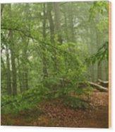 Forest Light 3 Wood Print