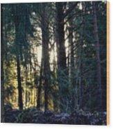 Forest Magic 8 Wood Print