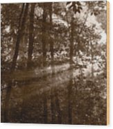 Forest Mist B And W Wood Print