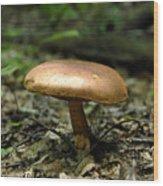 Forest Mushroom Wood Print