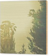 Forest Mysteria Wood Print