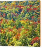 Forest Of Color Wood Print