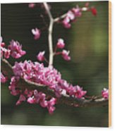 Forest Pansy Redbud Branch In May Wood Print