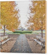 Forest Park Benches Wood Print