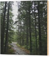 Forest Path At Grafton Notch State Park Wood Print