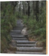 Forest Pathway Wood Print