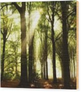 Forest Rays Wood Print