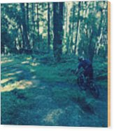 Forest Ride Wood Print