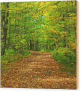 Forest Road In The Fall Wood Print