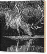 Forest Royal Bull Elk Wood Print