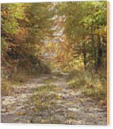 Forest Stone Path Wood Print
