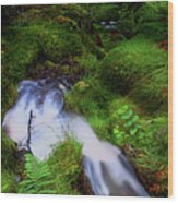 Forest Stream. Benmore Botanic Garden Wood Print