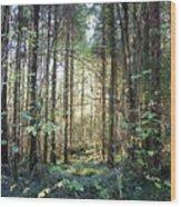 Forest Sunshine Wood Print