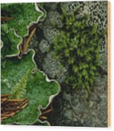 Forest Textures Wood Print