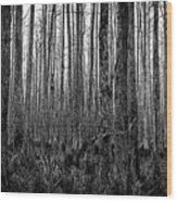 Forest Thru The Trees Wood Print