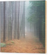 Forest Trail Through Pines Wood Print