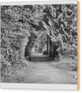 Forest Tunnel Wood Print