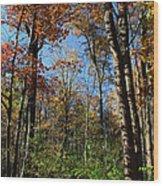 Forest Veteran Wood Print