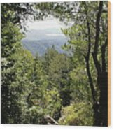 Forest View From Mt Tamalpais Wood Print