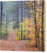 Forest Walk Wood Print