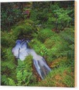 Forest  Water Stream. Benmore Botanic Garden Wood Print