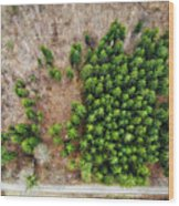 Forest With Green Trees From Above Wood Print