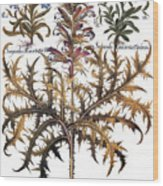 Forget-me-not & Acanthus Wood Print