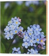 Forget Me Not 1 Wood Print