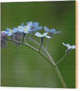 Forget-me-not 2 Wood Print