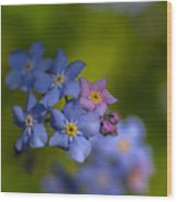 Forget Me Not 2 Wood Print