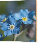 Forget -me-not 3 Wood Print
