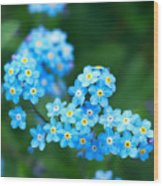 Forget -me-not 4 Wood Print