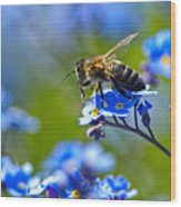 Forget Me Not Bee 2 Wood Print