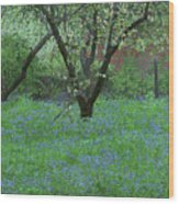 Forget Me Not Flowers Wood Print