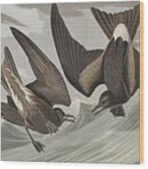 Fork-tail Petrel Wood Print