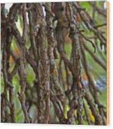 Form Color Texture Pattern Plants 15 Wood Print