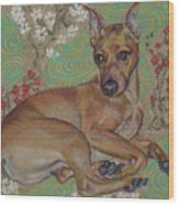 Mini-pinscher Wood Print
