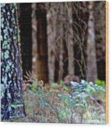 Forrest Wood Print