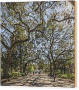 Forsyth Park Wood Print