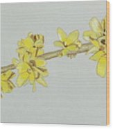 Forsythia Sprig Poster By Glenda Zuckerman