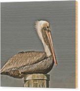Fort Pierce Pelican Wood Print