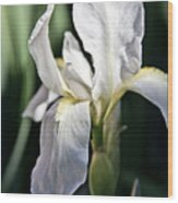 Fortnight Lilly Wood Print by Mamie Thornbrue