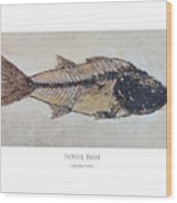 Fossil Fish Wood Print