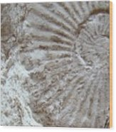 Fossil One Wood Print