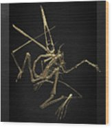 Fossil Record - Gold Pterodactyl Fossil On Black Canvas #1 Wood Print