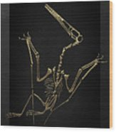 Fossil Record - Gold Pterodactyl Fossil On Black Canvas #4 Wood Print