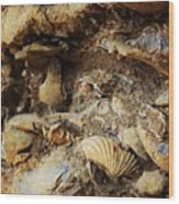 Fossil Shells Wood Print