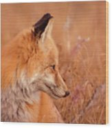 Found Fox Wood Print