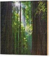Founders Tree Sunset Wood Print by Joe Urbz