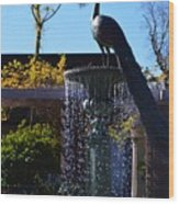 Fountain And Peacock Wood Print
